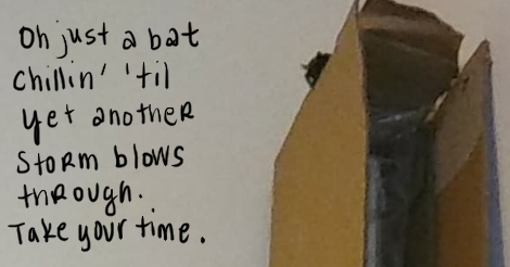 """This is a photo of a bat looking over the side of a tall cardboard box. The words next to it say """"oh just a bat chillin' til yet another storm blows through. take your time."""""""